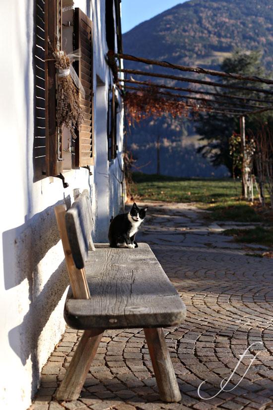 2_gatto